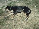 My dog benny