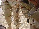 Iraq Camel Spiders