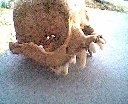 Unidentified CreatureSkull (1)