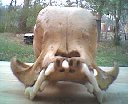 Unidentified CreatureSkull (5)