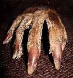 Unidentified Paw