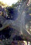 Ghost of young woman in a tree