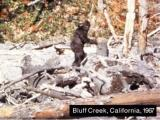 Patterson Bigfoot still (2)