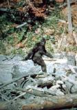 Patterson Bigfoot still (1)