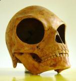 The Sealand Skull (2)