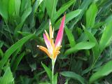 Tubular Plant