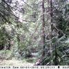 Trail Cam 012