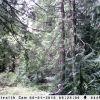 Trail Cam 011