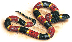 New Fossil Tells Of A Terrestrial Origin For Snakes