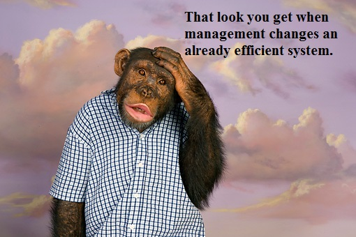 ape2.jpg