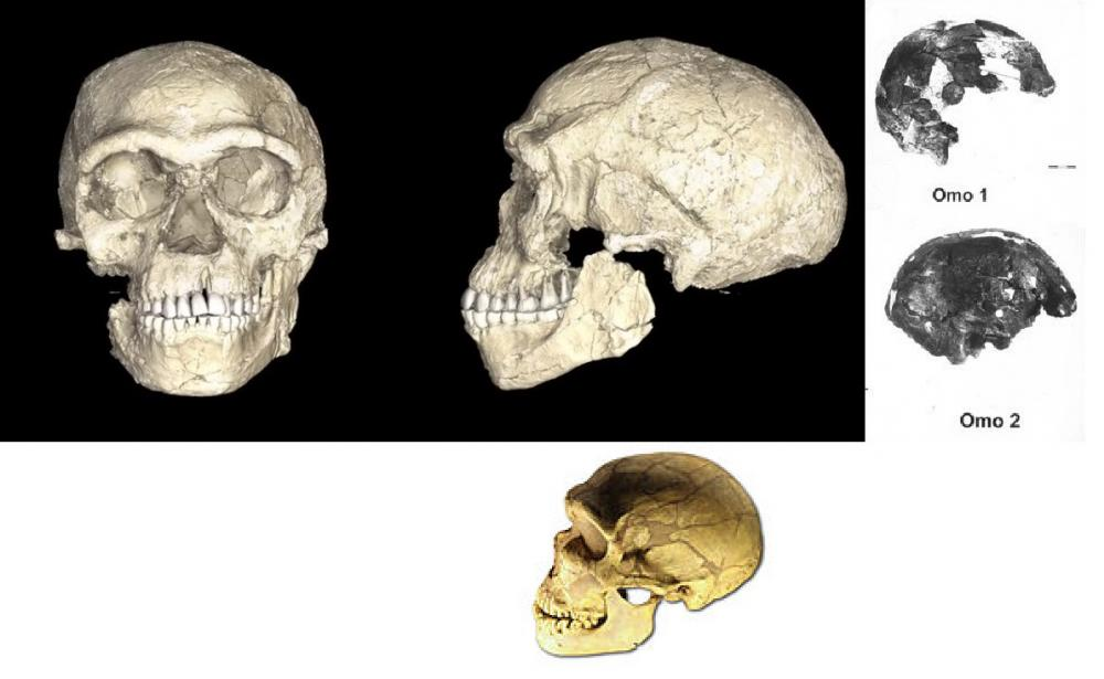 59429ed373388_Morocco-HomosapiensfrontandsideviewskullcomparedtoOmo1andOmo2andLaFerrassie1-Neanderthal-skulls.thumb.jpg.148ea7bb49711a60ca4ad4a5b858f2fe.jpg