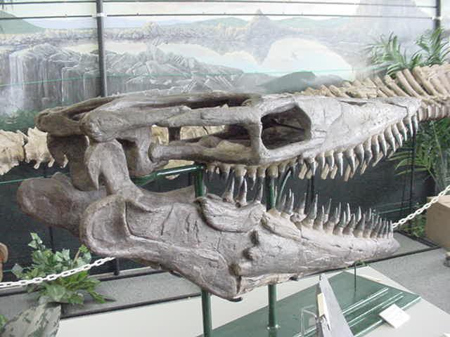MosasaurSkull2.jpg