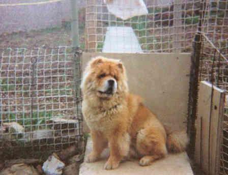 dog_chow_yogi.jpg