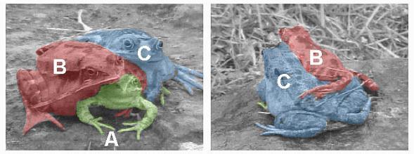 trifrog2.jpg