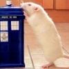 Agile Rat