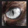 AvaTheWerewolf