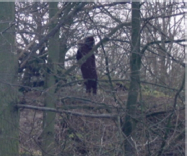 England bigfoot