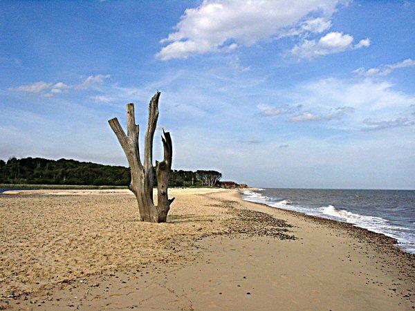 Beach sentinel