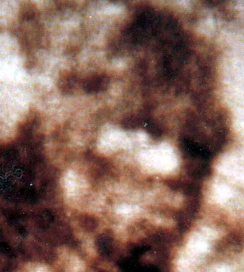 Patterson Footage Bigfoot Face Enlargement