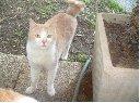 Strange tail!!! (2)