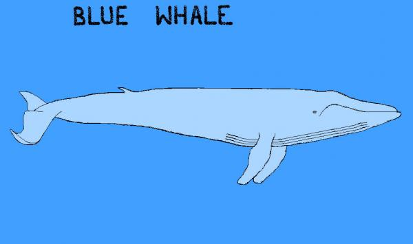 Blue Whale MsPaint