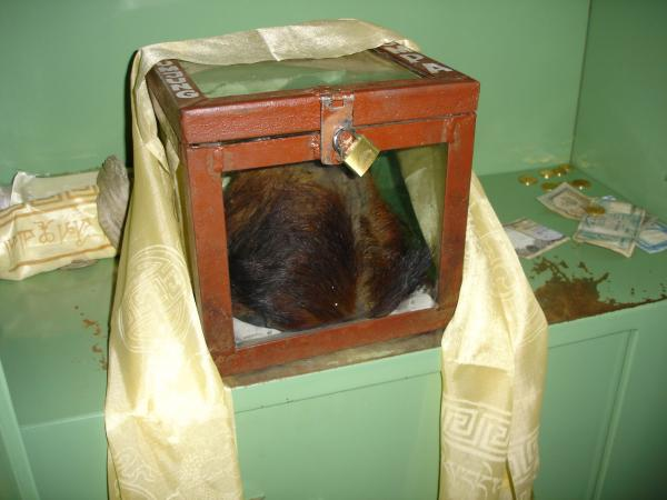 Yeti scalp in display case