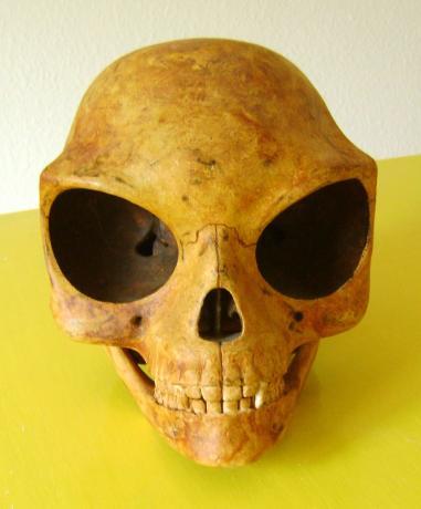The Sealand Skull (1)