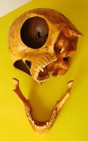 The Sealand Skull (4)