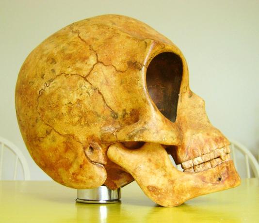 The Sealand Skull (3)