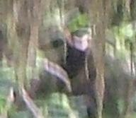 Ketchikan Ape zoomed in