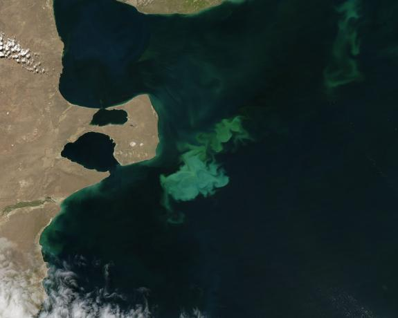 Phytoplankton bloom off Argentina