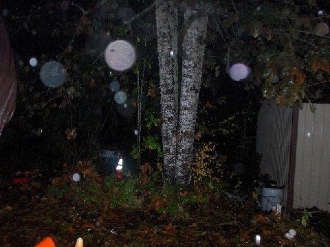 Orbs by Tree