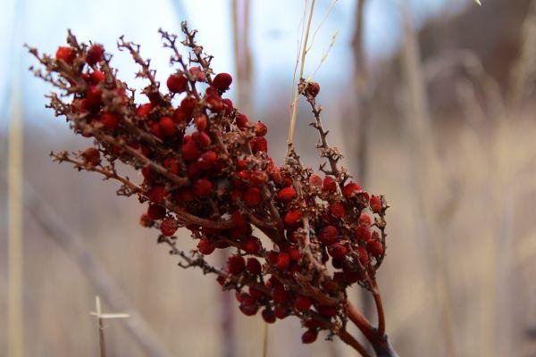 Kansas Flora
