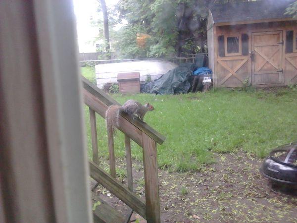 Deranged squirrel
