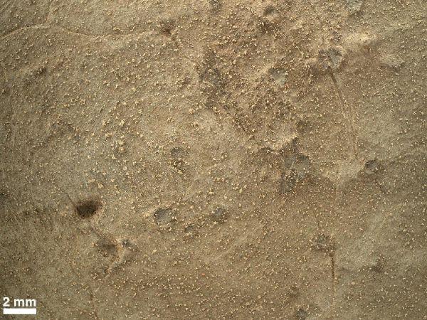 Close-up of Brushed Area on Martian Rock Target 'Ekwir_1'