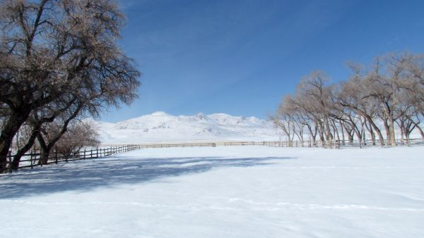 A View from the Ranch