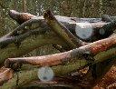 Snelsmore Orbs December 2004