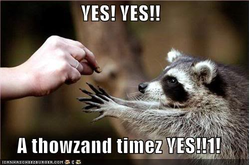 funny-pictures-racoon-yes.jpg.41e1e68dc7c6aa5c8bd0fe3e02fe9026.jpg