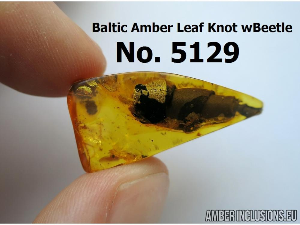 Unique, Rare, Baltic amber LEAF KNOT. Made beetle No.5129.jpg