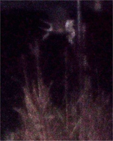 alienn.jpg