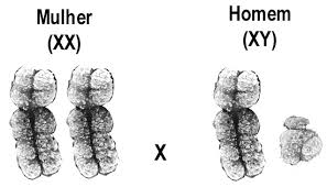 cromossomos-unesp.jpg