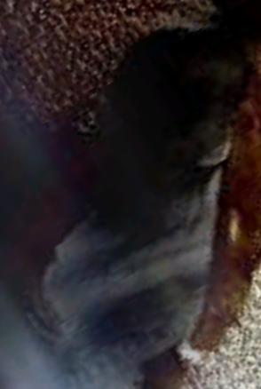 zoom1 alien.png