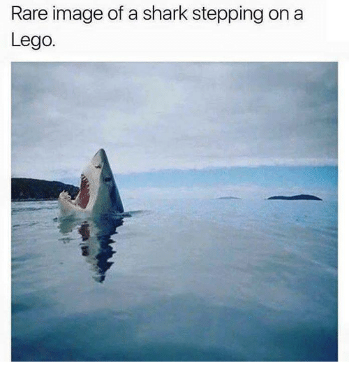 rare-image-of-a-shark-stepping-on-a-lego-4525934.png