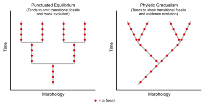 434px-Fossils_in_Evolutionary_Biology.png