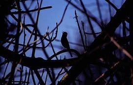 lonleybird.jpg.711beb16c2e747a22ca234d272173d3d.jpg