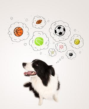 dog-thinking.jpg