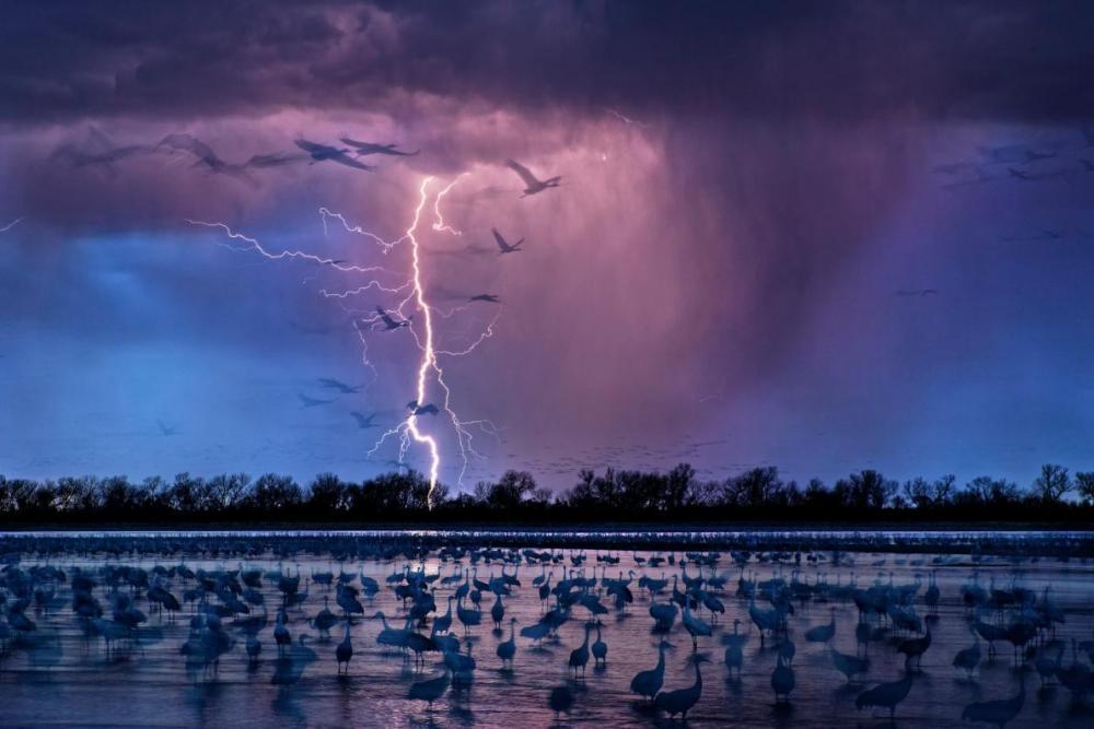 birdslightningswamp.jpg