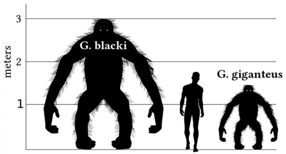 The-REAL-Bigfoot.jpg