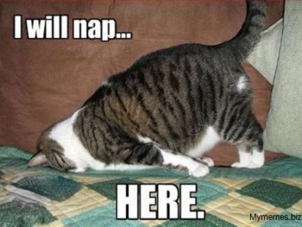 tiredcat.jpg.6fec0384b8946d4cef57bbbc056f2091.jpg