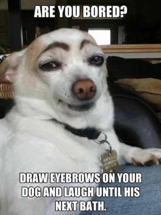 Funny-Dog-Meme-Are-You-Bored-Draw-Eyebrows-On-Your-Dog-And-Laugh-Until-His-Next-Bath-Image.jpg